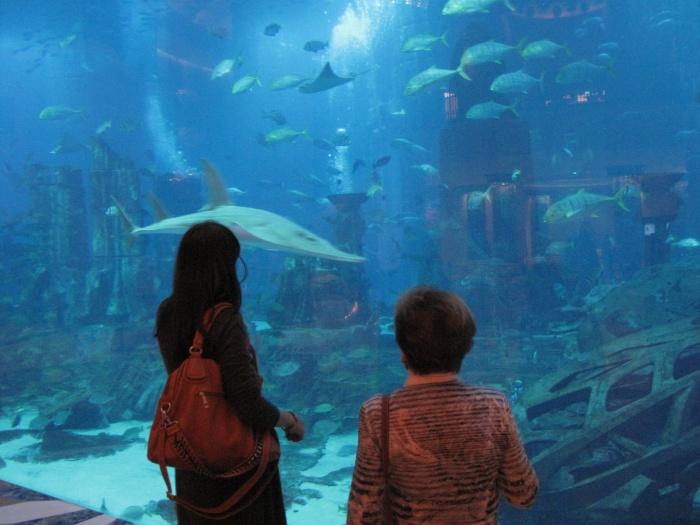deutsche aquarium zeitung