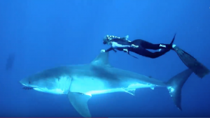 OCEAN RAMSEY - SHARK LADY